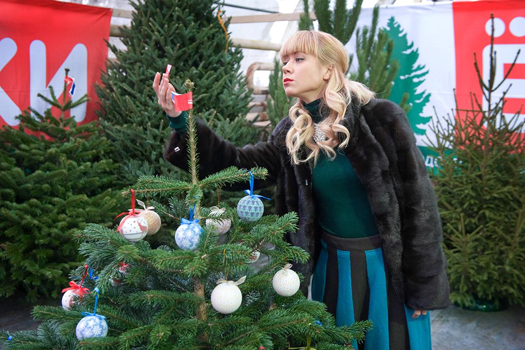 Елочные базары 2018 в Санкт-Петербурге  где купить елку на Новый год ... 12a78c31314