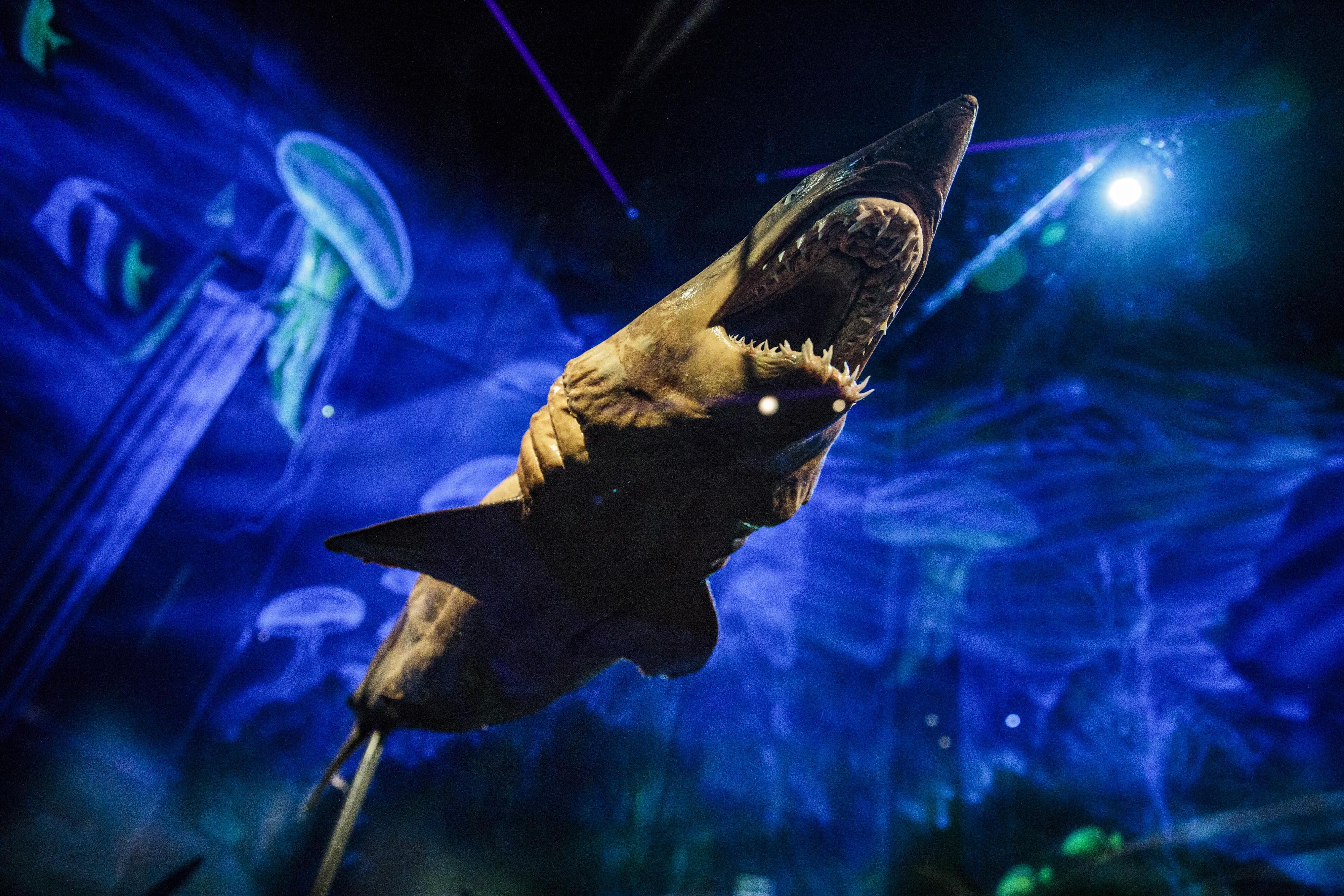 Exhibition shows body worlds under water