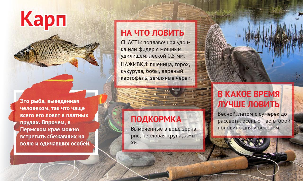 Где клюет рыбы в перми