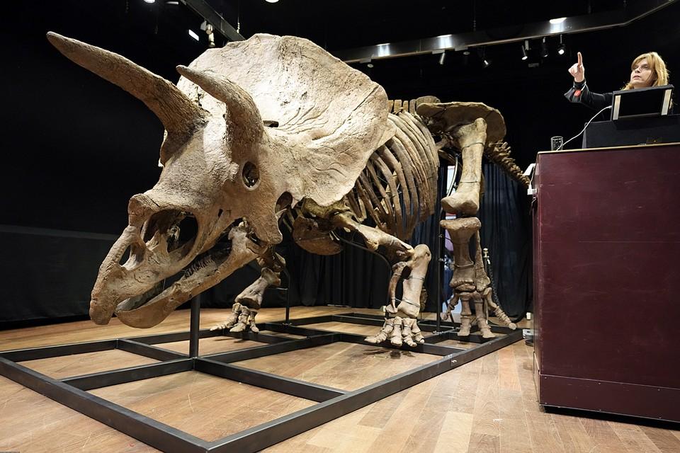 В Бельгии скелет огромного динозавра ушел с молотка за баснословную сумму